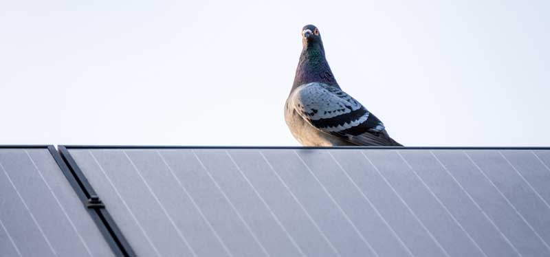 bird-proofing-solar-panels